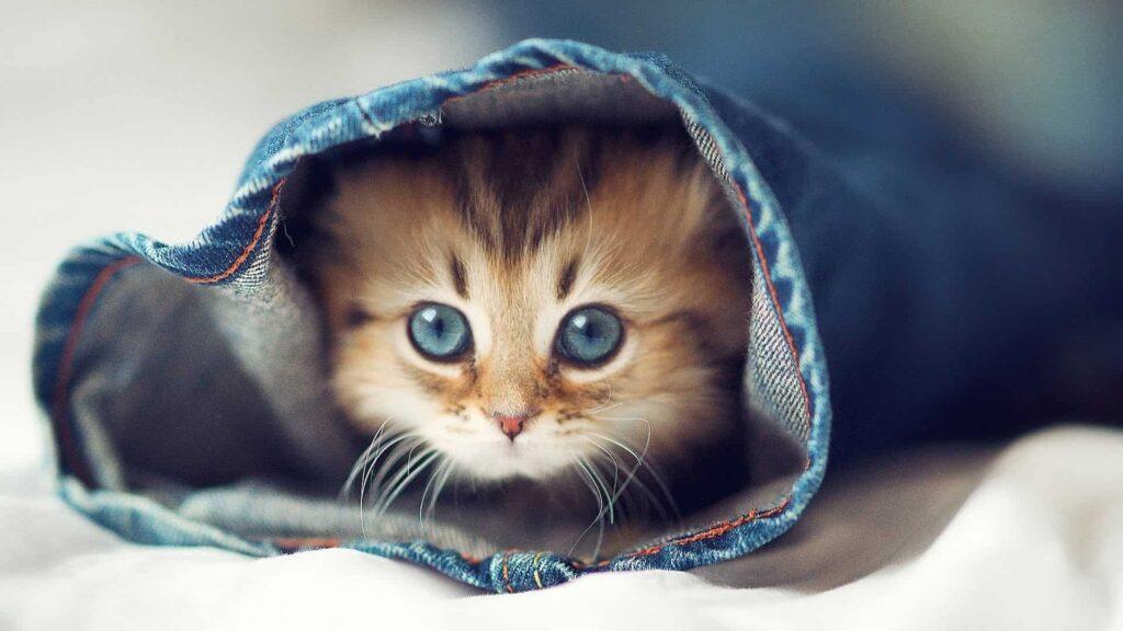 Kediler gaz çıkarır mı