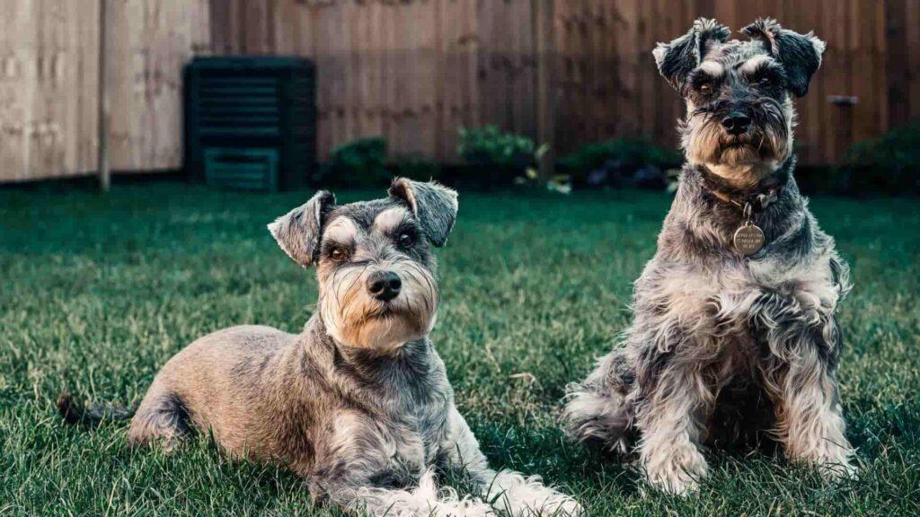 köpek isimleri