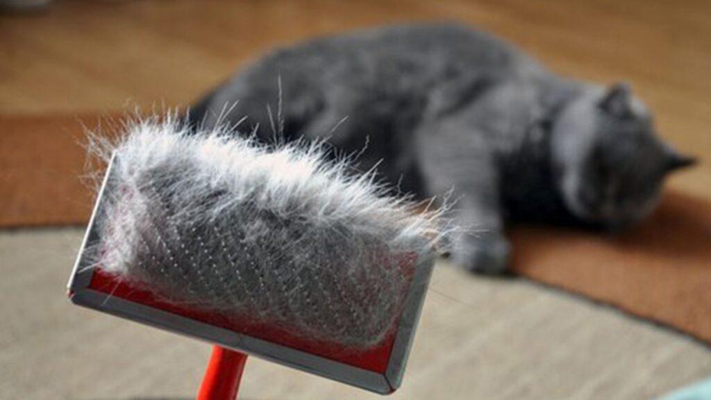 Kedi neden kusar