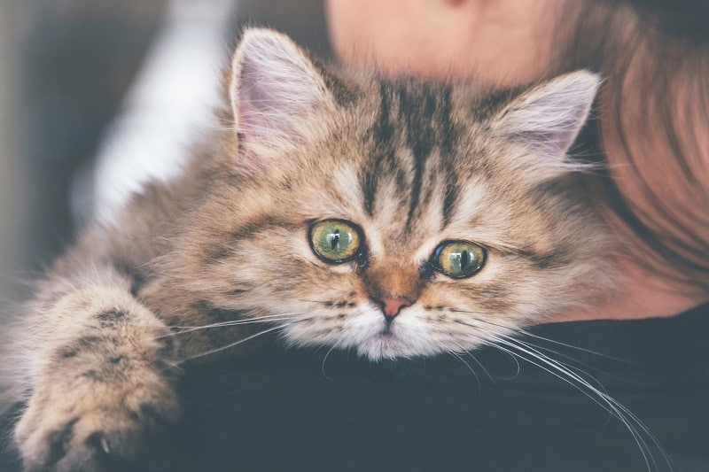 Ağlayan Kedi