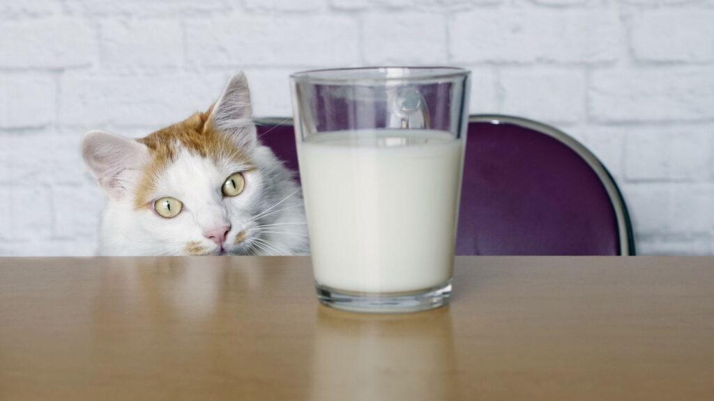 kedilere süt verilir mi