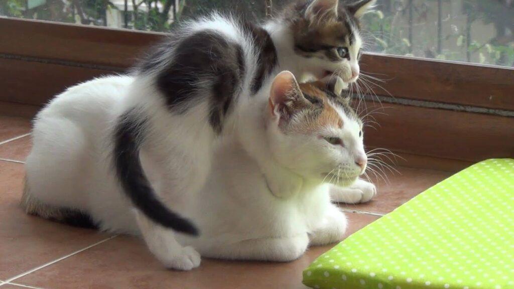 kediler doğumdan sonra ne yapar