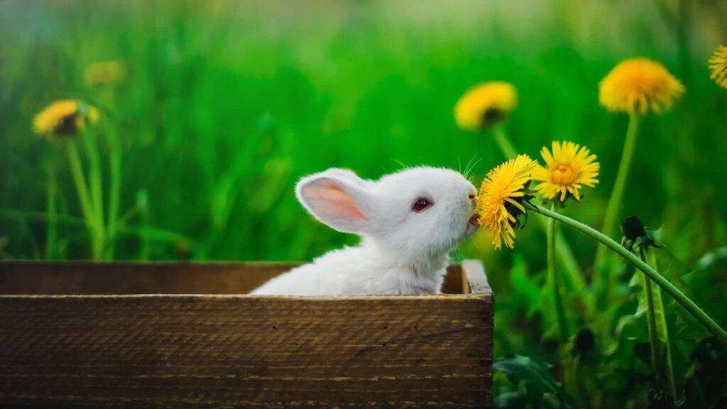 tavşan kaç ayda doğurur