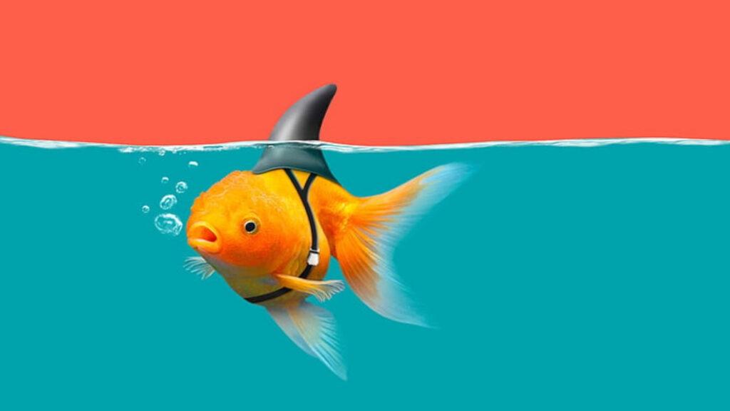 Japon balıkları bakımı