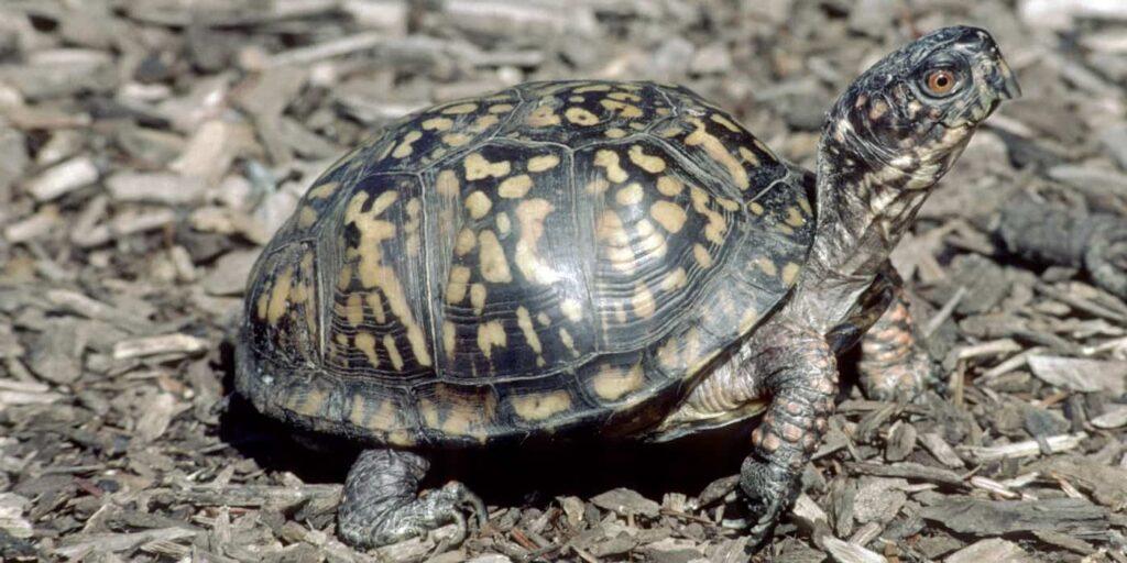 Kaplumbağa Hakkında Bilgi