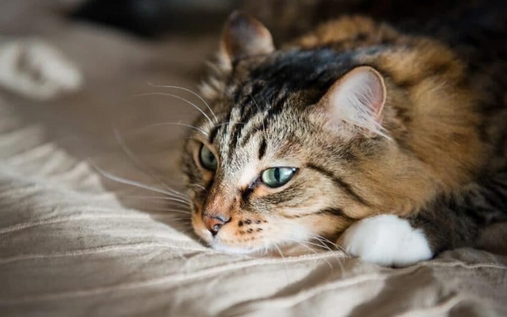 kedi depresyonu