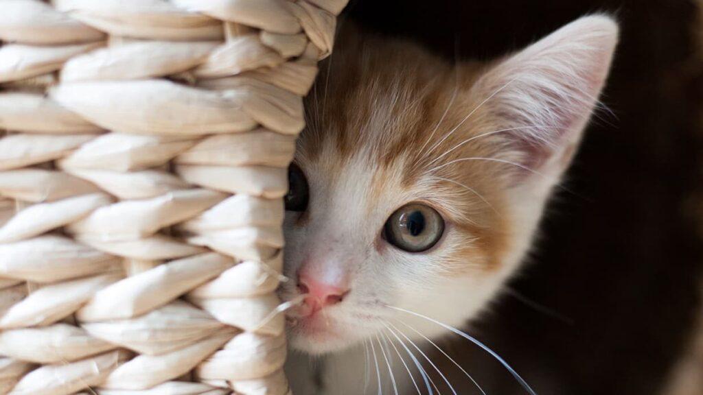 Kedi Korkusu Nasıl Yenilir