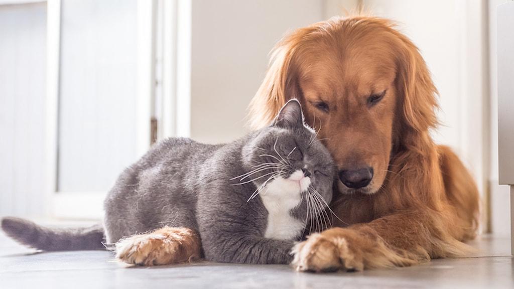 evde kedi mi köpek mi