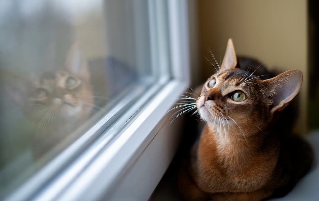 Kedi Yaşam Süresi
