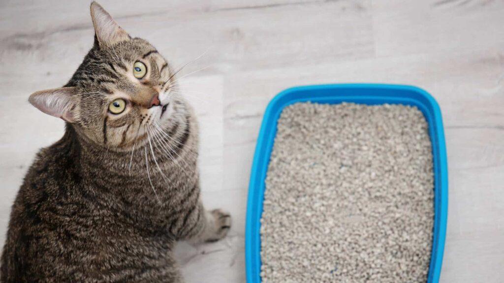 Kedi kuma nasıl alıştırılır