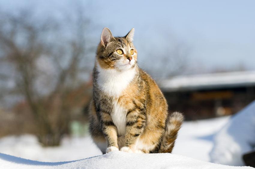 Kedilerin Hamilelik Süresi