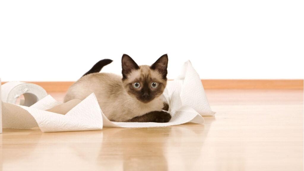 kedim ishal ama halsiz değil