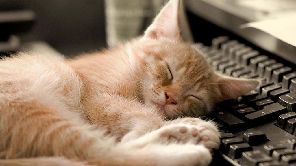 Kediler neden çok uyur