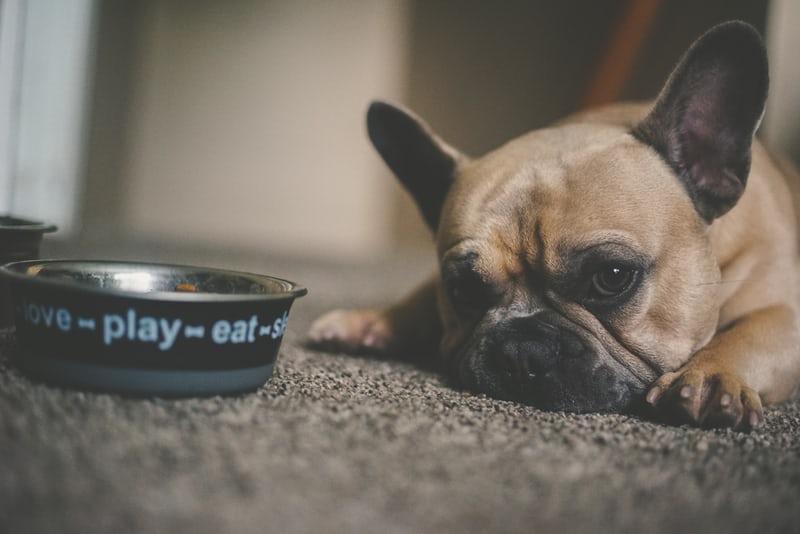 Köpeğim Yemek Yemiyor