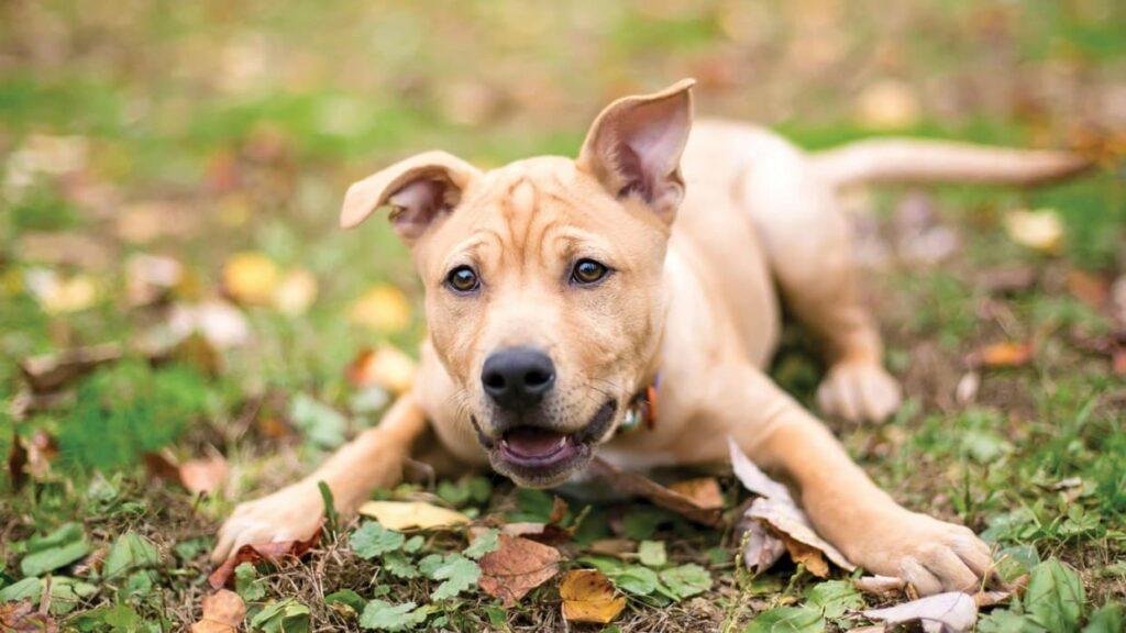 Köpek Kaç Yıl Yaşar