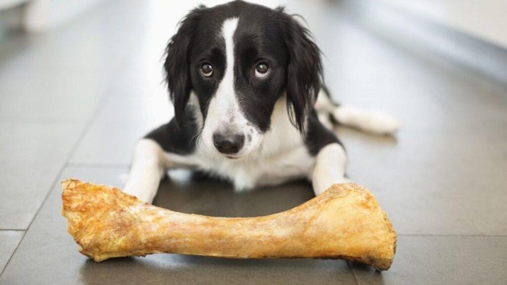 köpekler kemik yer mi