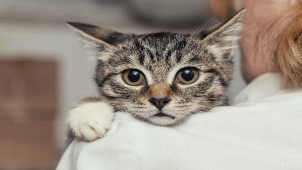 Kedi Alerjisi Nasıl Geçer