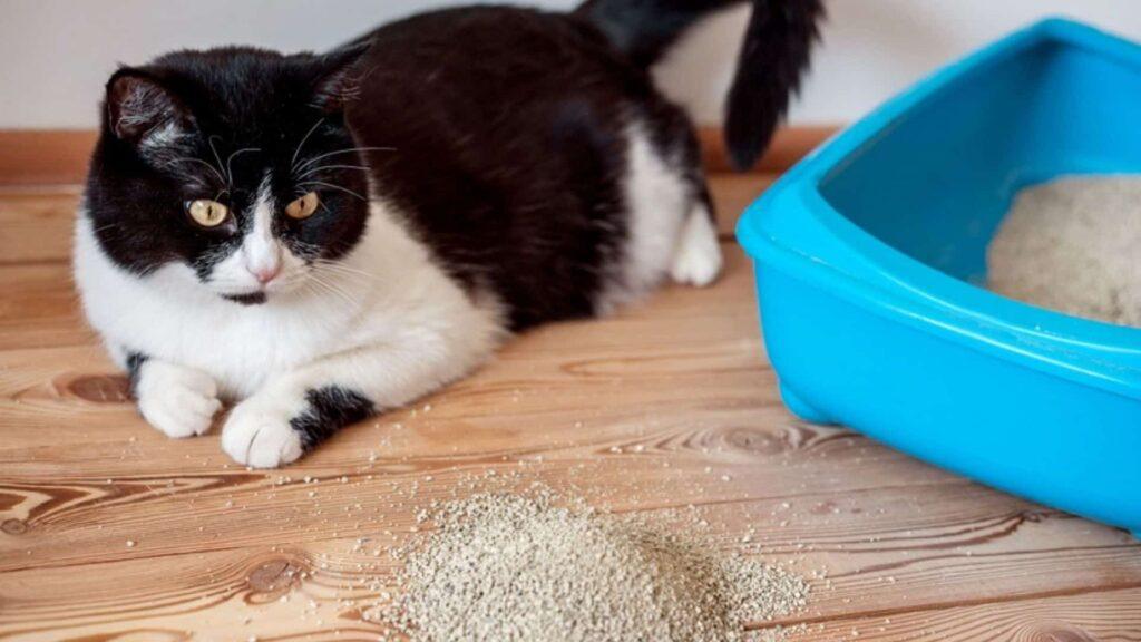 Yavru kediyi kuma alıştırma