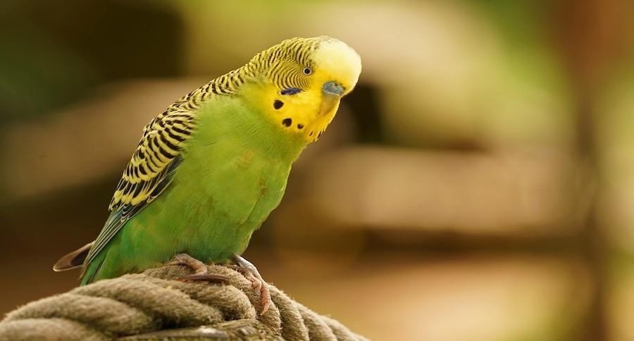 Kuş Hastalıkları