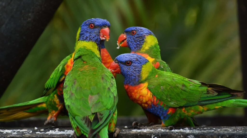 konuşan papağan türleri