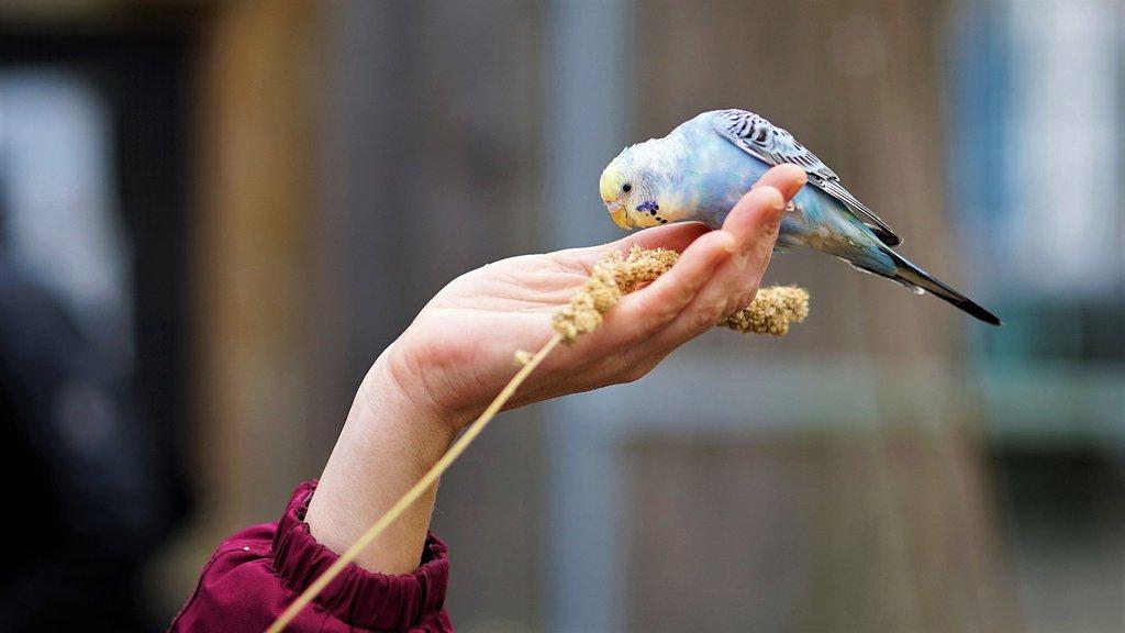 Muhabbet Kuşlarının Ömrü