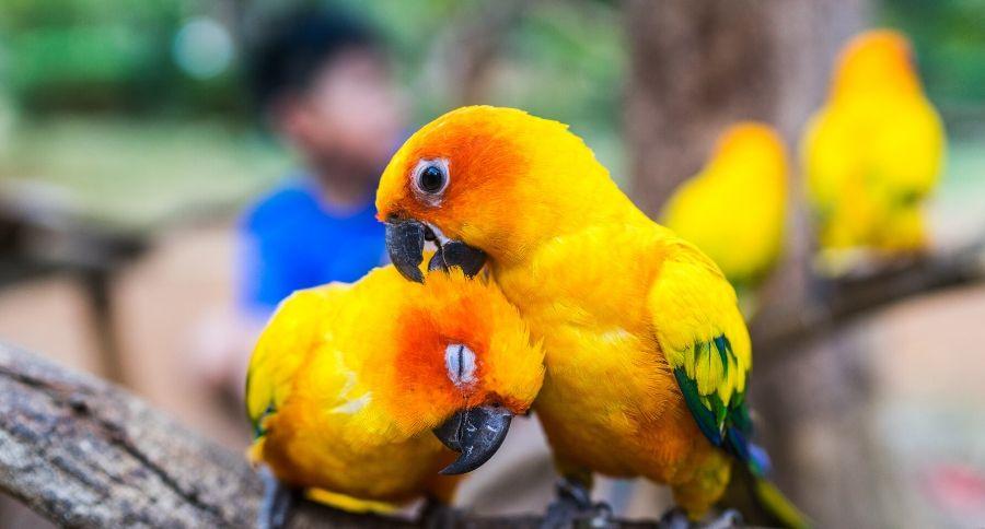 papağan türleri