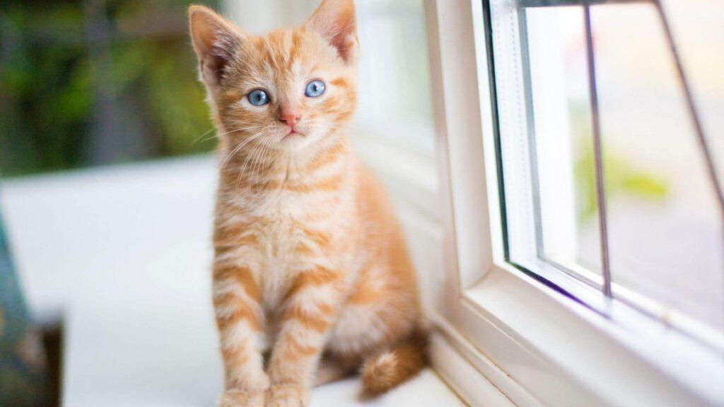 Dişi Kedi İsimleri