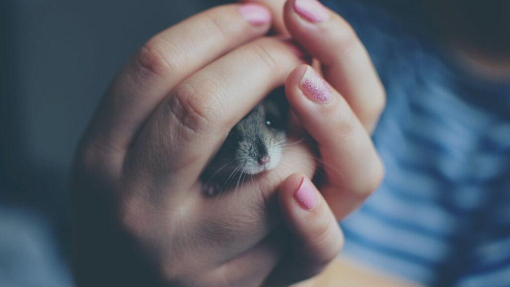 Hamster gonzales