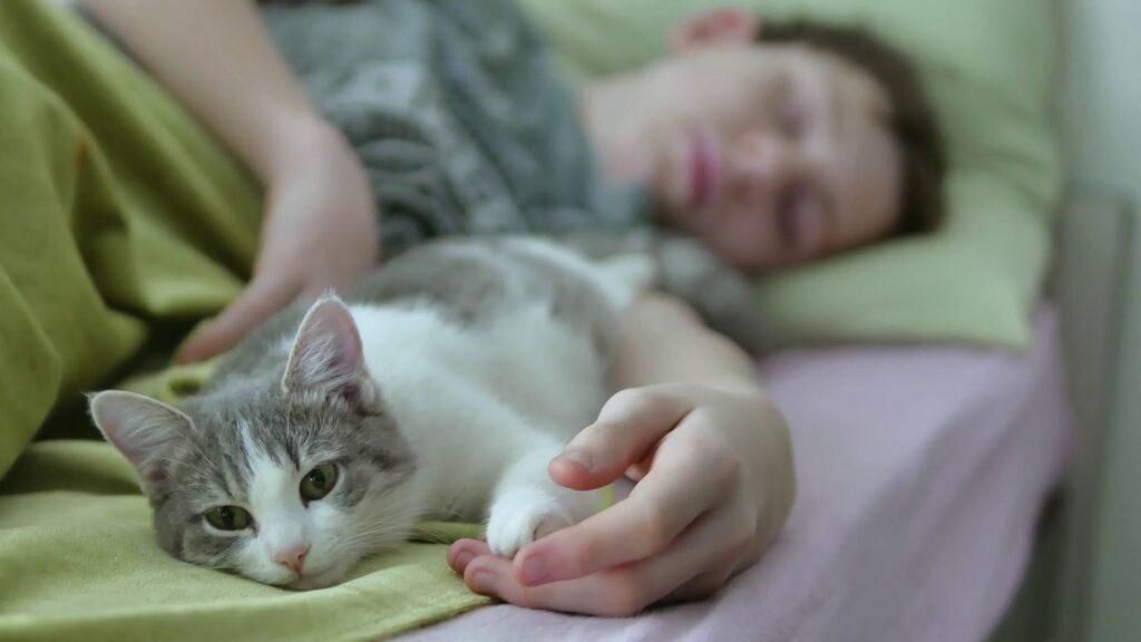 Kediler neden sahipleriyle uyur?