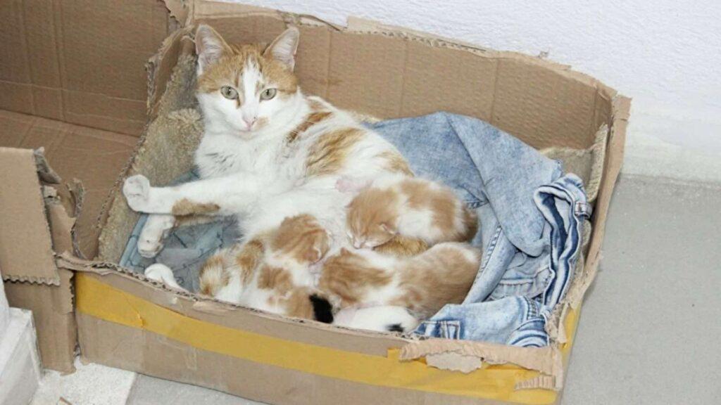 Kedilerin doğum süresi