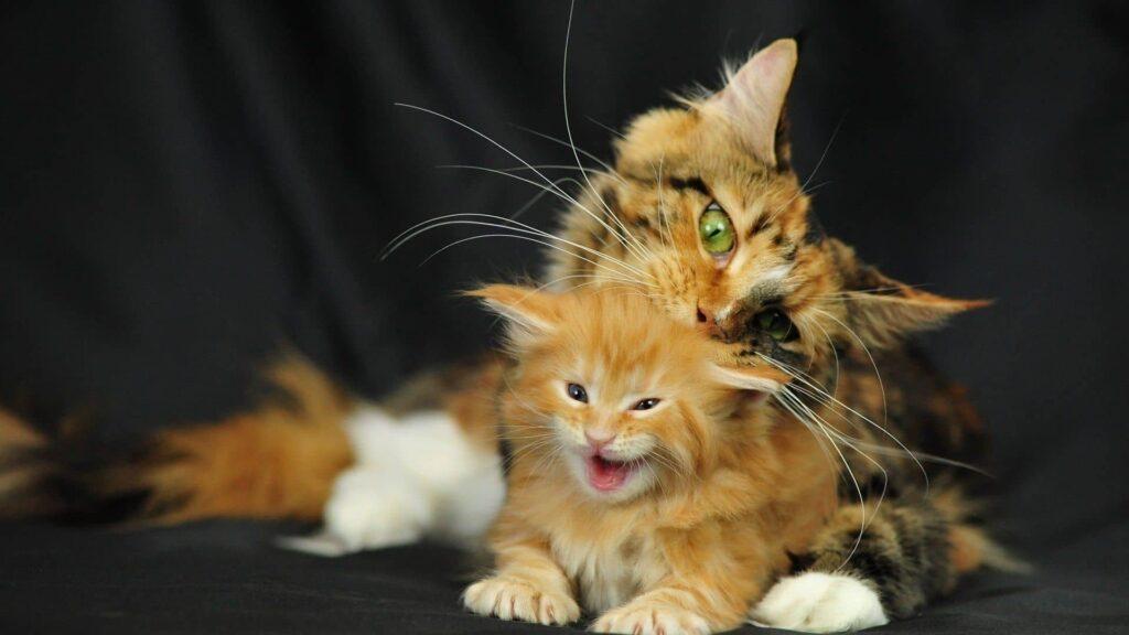 bebek kedi bakımı