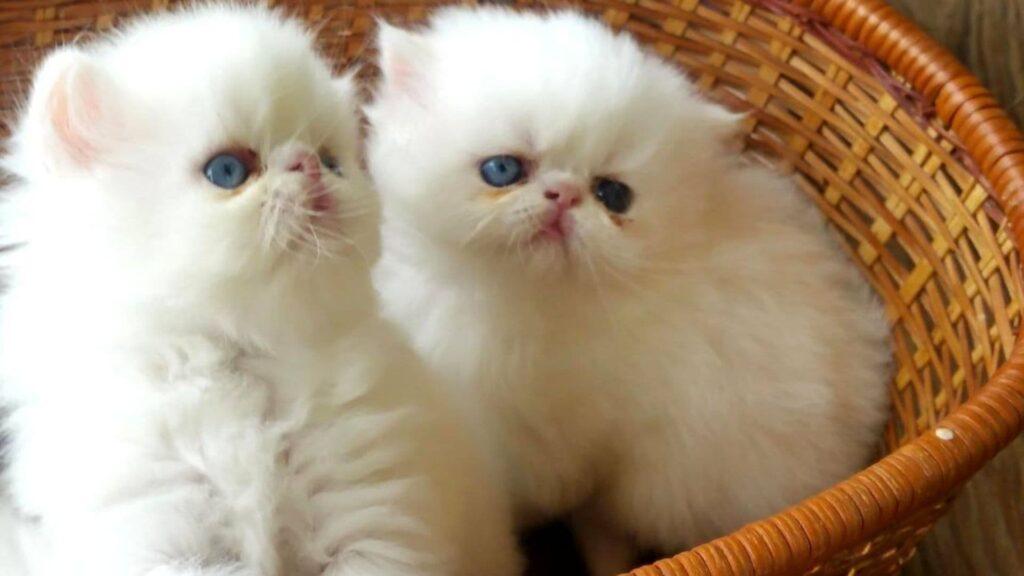 yeni doğmuş kedi yavrusu
