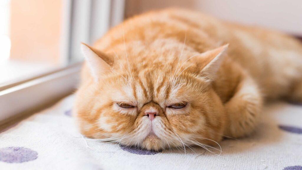 Kedi Maltı
