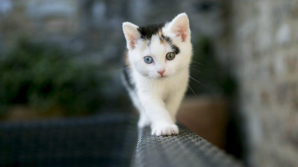 Kediler Kaç Sene Yaşar
