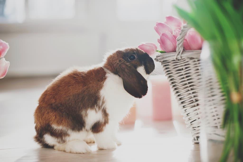Tavşan Satılan Yerler