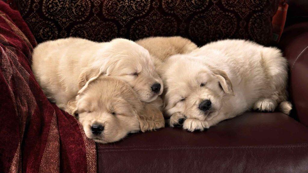 """""""Köpekler rüya görür mü?"""""""