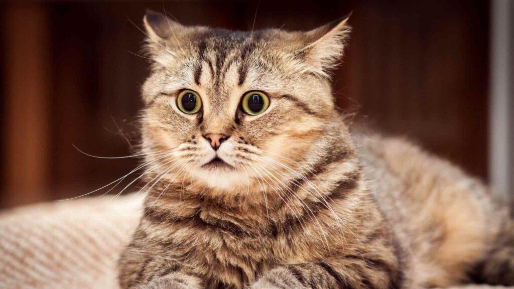 Kediler neden kusar ve ishal olur?