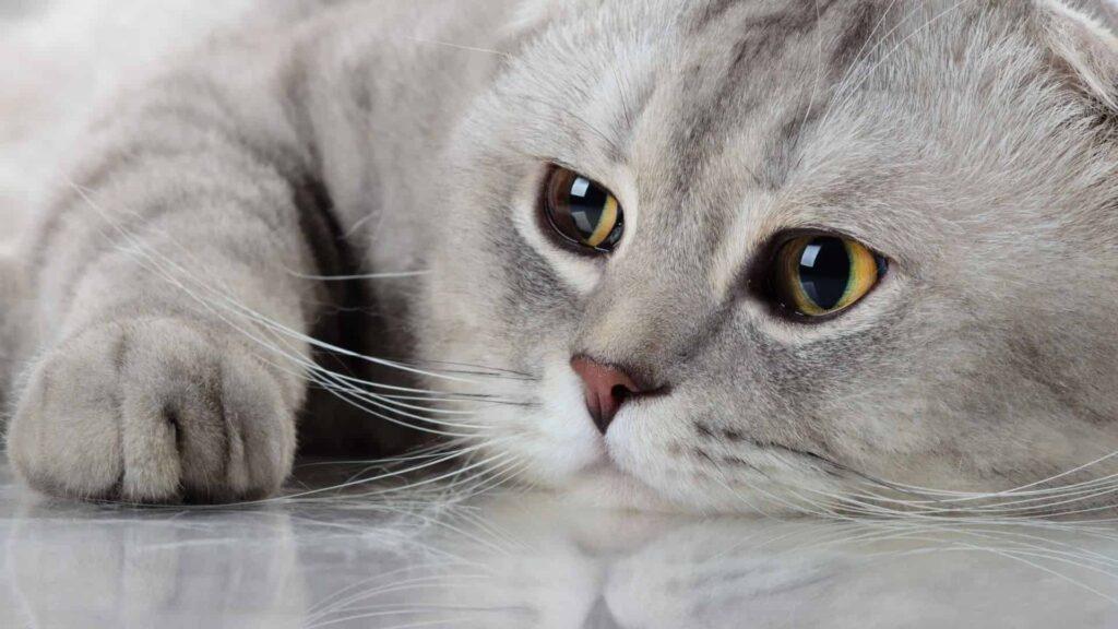 Kedinizin Daha Uzun Yaşaması İçin Neler Yapabilirsiniz?