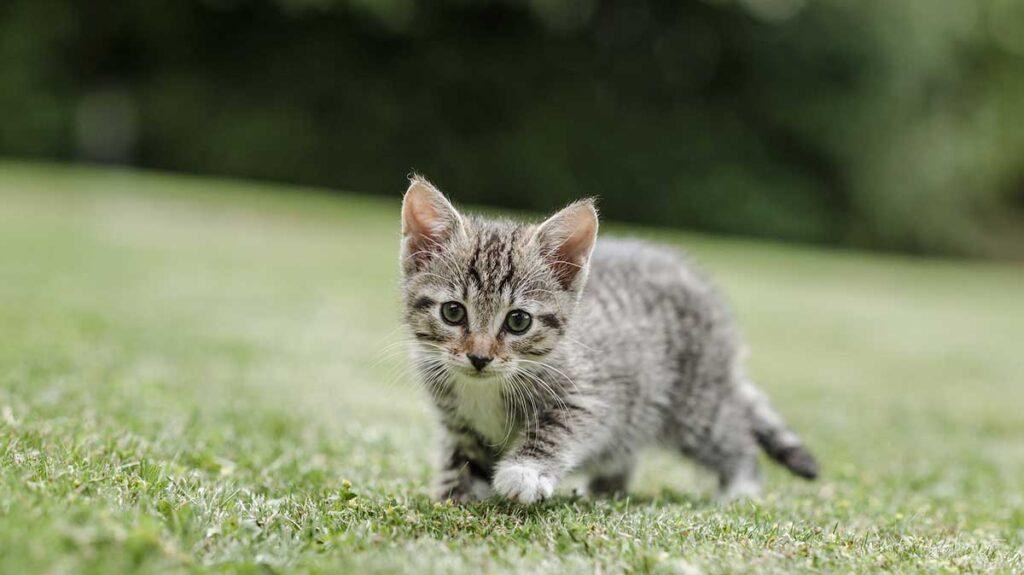 Yeni Doğmuş Kediye Ne Verilir